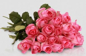lovely-pink-avalanche-miflora
